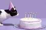 BirthdayCat_1500-56a6de8d5f9b58b7d0e531d9
